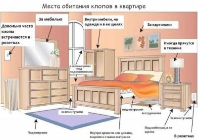 Как узнать, что в спальне завелись постельные клопы